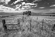 Big Sky Prints - Dont Fence Me In - Black and White Print by Peter Tellone
