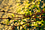 Barbed Wire Fence Framed Prints - Dont Fence Me In Framed Print by Bonnie Bruno