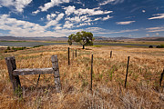 Big Sky Prints - Dont Fence Me In Print by Peter Tellone