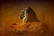 Cats Digital Art Digital Art Prints - Dont Wake a Sleeping Tiger Print by Betty LaRue
