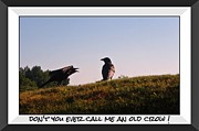 Crows Greeting Cards Prints - Dont You Ever Print by John Malone