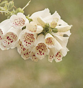 Modest Prints - Dots-Foxglove Flower Print by Kim Hojnacki