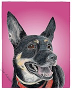 Animal Shelter Drawings - Dotty - a former shelter sweetie by Dave Anderson