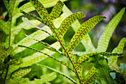 Fronds Prints - Dotty Print by Christi Kraft