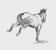 Wild Horse Drawings - Double Barrel by Gretchen Almy