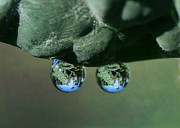 Waterdrops Prints - Double Drop Print by Fraida Gutovich