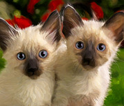 Siamese Kittens Prints - Double Trouble Print by Michael Pickett