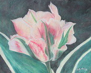 Blooming Pastels Framed Prints - Double Tulip Framed Print by Cathy Lindsey