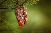 Pods Digital Art Framed Prints - Douglas Fir Cones Framed Print by Sharon  Talson