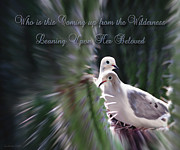 Constance Woods - Doves Nesting In Cactus