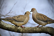 Love Bird Photos - Doves by Tim Palmer