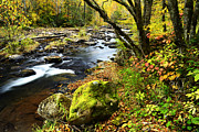 Williams River Scenic Backway Prints - Down by the River Print by Thomas R Fletcher