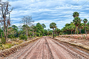Palmetto Photos - Down Chisolm Island Road by Scott Hansen