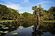 Down In The Bayou Print by Lana Trussell
