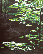 Dappled Light Originals - Down In The Holler by Jeffrey Bess