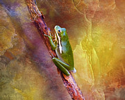 Waterscape Digital Art Digital Art - Down In The Swamp Tree Frog by J Larry Walker