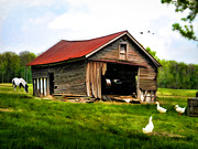 Dilapidated Digital Art - Down on the Farm by Mary Timman
