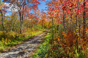 Dirt Roads Photos - Down the Autumn Road by Bill  Wakeley