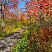 Autumn Foliage Prints - Down the Autumn Road Square Print by Bill  Wakeley