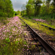 Spring Florals Posters - Down the tracks Poster by Bill  Wakeley