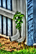 Downspout Print by Michael Braham