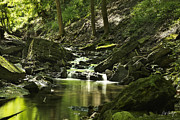 Stock Images Prints - Downstream Moss Print by Phill  Doherty