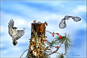Photos Of Lichen Posters - Downy and Titmouse playing on Lichen Stump Poster by Randall Branham