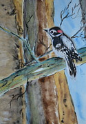 Woodpecker Paintings - Downy  by Beverley Harper Tinsley