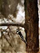 Davandra Cribbie - Downy Woodpecker