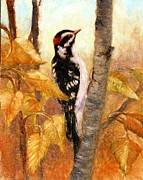 Robert Stump - Downy Woodpecker