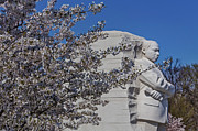 Cherry Blossoms Metal Prints - Dr Martin Luther King Jr Memorial Metal Print by Susan Candelario