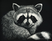 Raccoon Drawings - Draccoon by Stanley Morrison