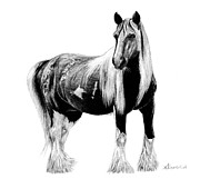 Mane Drawings - Draft Horse by Kayleigh Semeniuk