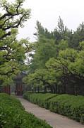 Qing  - Dragon Feet Tree