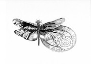 Dragon Fly Drawings Posters - Dragon Fly Poster by Shari Mallinson