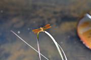 Kay Lovingood - Dragon on a Blade of Grass