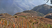 Food And Beverage Ceramics Prints - Dragon s Backbone Rice Terraces Print by Alexandra Jordankova