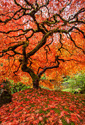 Peter Lik Photos - DragonFire by Aaron Reed