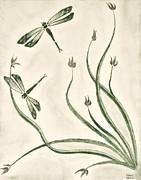 Dragonflies Print by Sean Mitchell