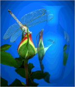 Joyce Dickens Digital Art Prints - Dragonfly And Bud On Blue Print by Joyce Dickens