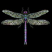 R  Allen Swezey Framed Prints - Dragonfly Bedazzled Framed Print by R  Allen Swezey