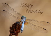 Dragonfly Framed Prints - Dragonfly Birthday Card Framed Print by Carol Groenen