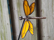 Pewter Dragonfly Glass Art - Dragonfly by Brenda Brown