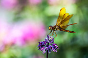 Debra Vronch Metal Prints - Dragonfly Metal Print by Debra Vronch