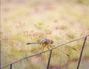 Judy Hall-folde Art - Dragonfly Dreams by Judy Hall-Folde