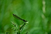 KamGeek Photography - Dragonfly during...