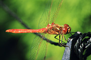 HJBH Photography - Dragonfly