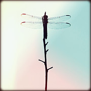 Florida Flowers Framed Prints - Dragonfly I Framed Print by Chris Andruskiewicz