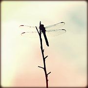 Florida Flowers Framed Prints - Dragonfly II Framed Print by Chris Andruskiewicz
