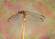Dragonfly Framed Prints - Dragonfly in Fantasy Land Framed Print by Sabrina L Ryan